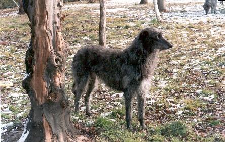 derrhound