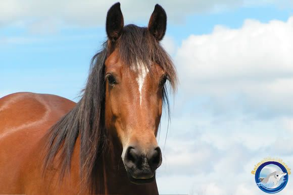 Cavalli a go go