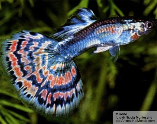 Milione pesci animali nel mondo - Pesci comuni in tavola ...