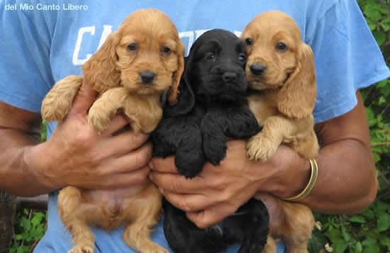 Cani Medio Piccoli Neri: Ad ognuno il suo i cani più belli del mondo. Adottati cane cucciolo ...